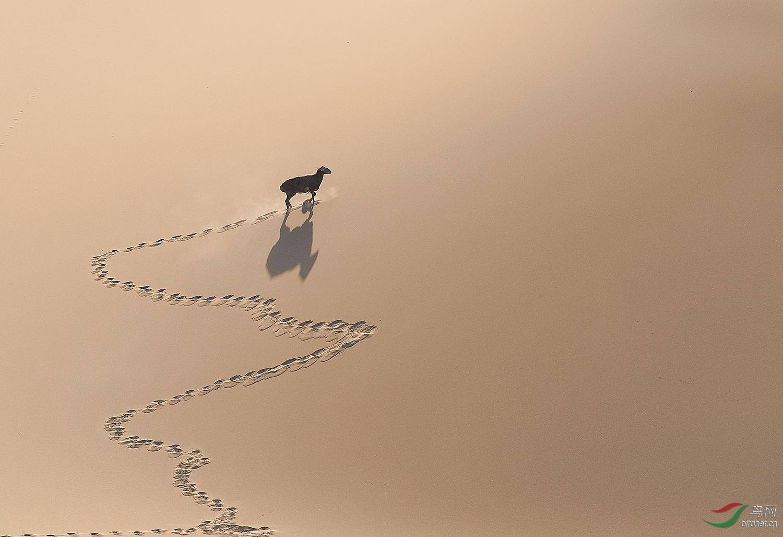 0196.路在何方-向往西藏.jpg