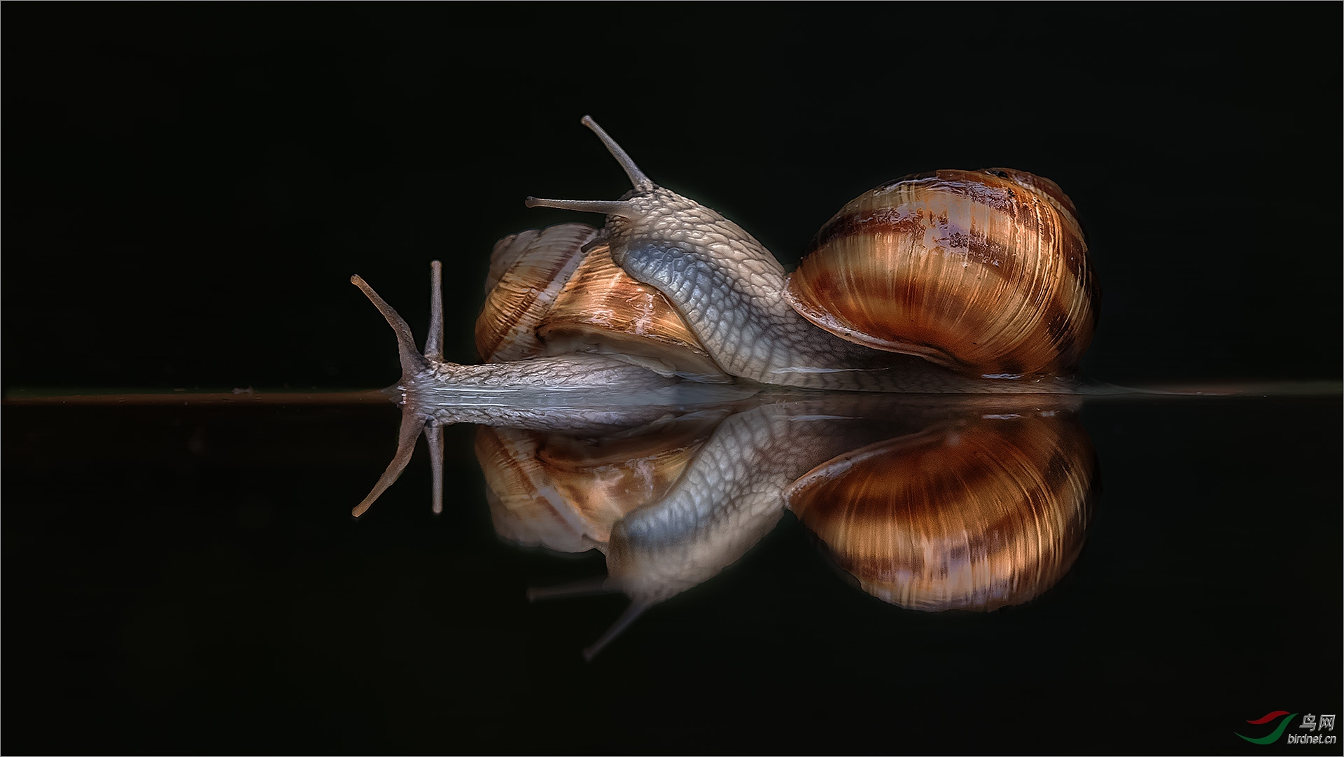 1166.爱的怀抱Richard Li-Snails in the water1.jpg