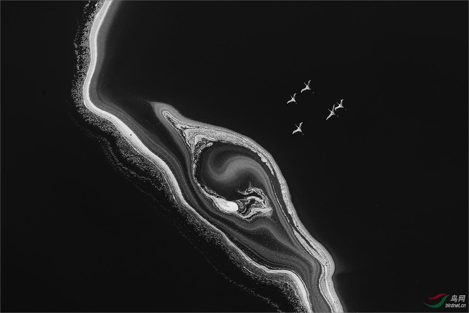 1651.黑白Richard Li-flamingoes 1.jpg