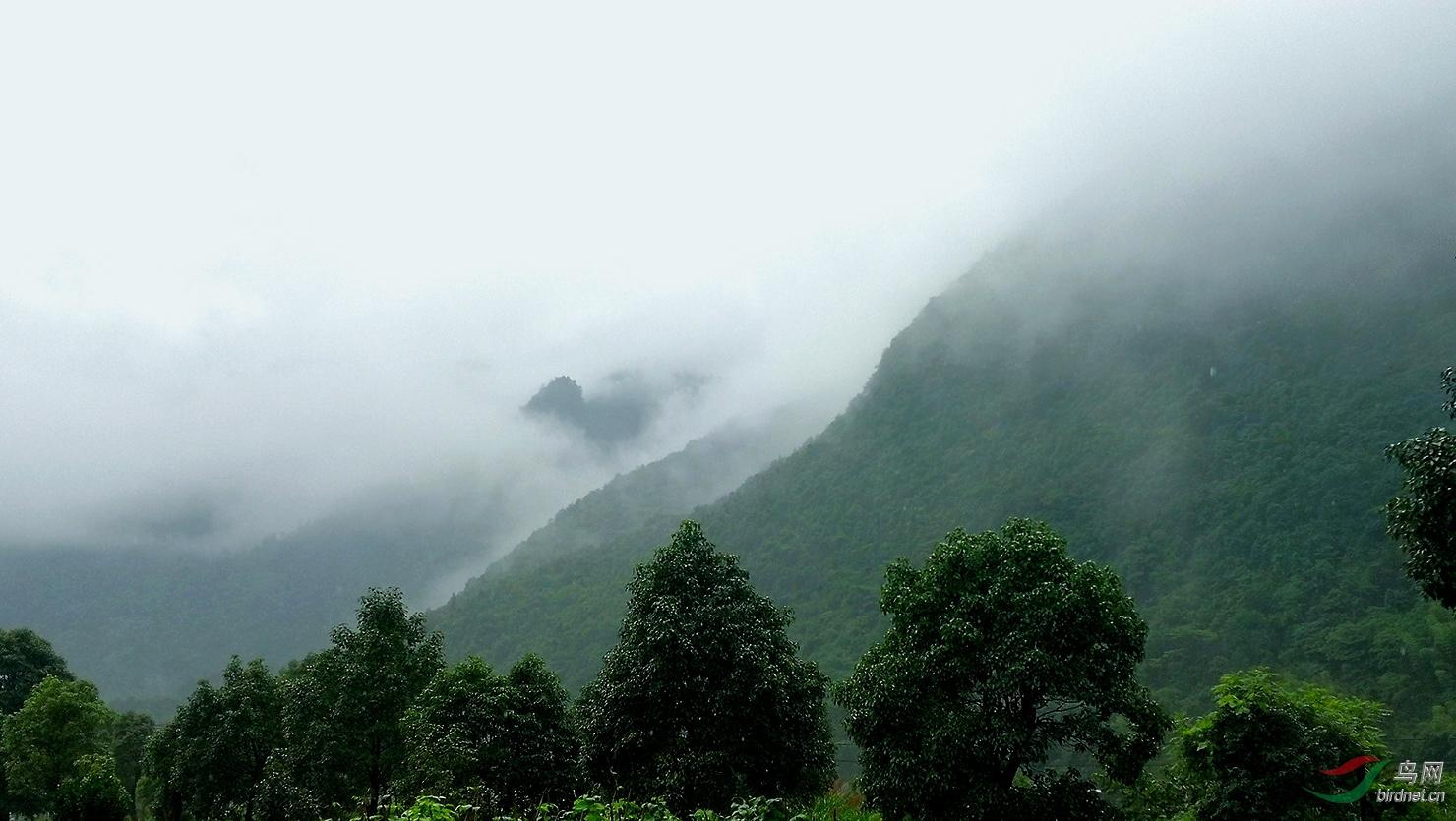 南岭的雾.jpg