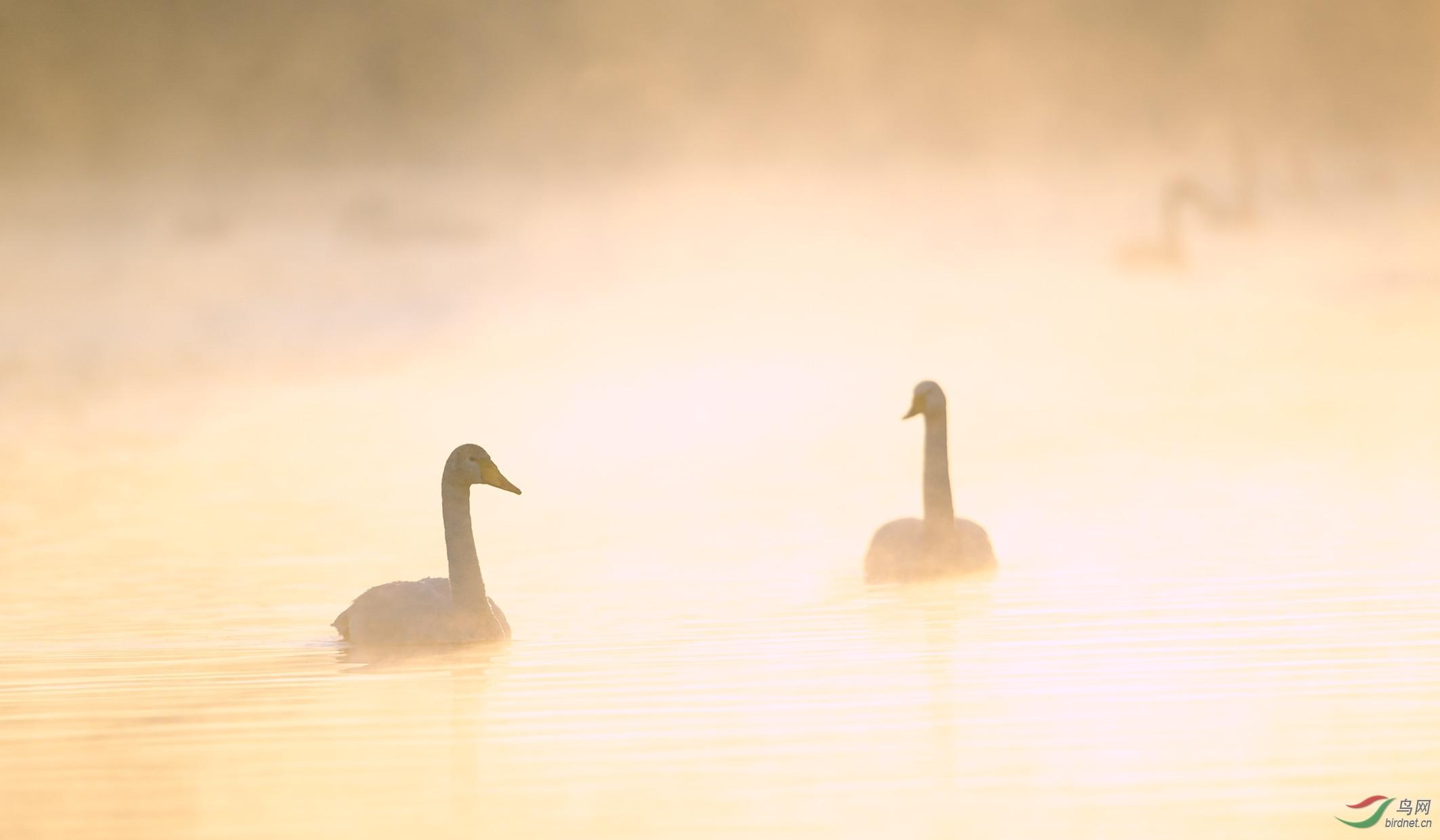 迷人的天鹅湖