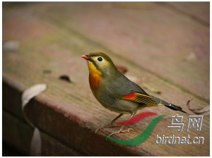 WechatIMG423_Fotor.jpg
