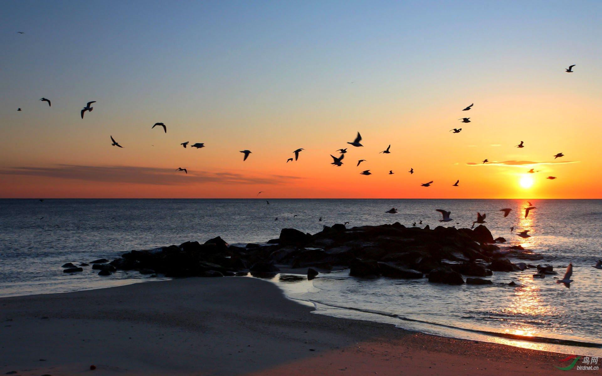 大海与海鸥2-2.jpg