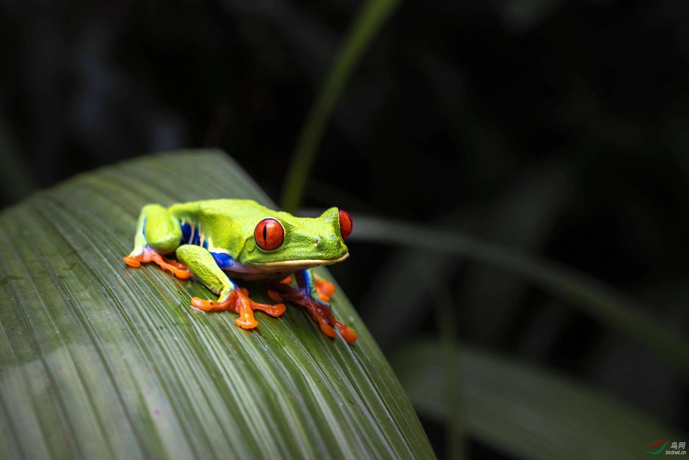 雨蛙.jpg