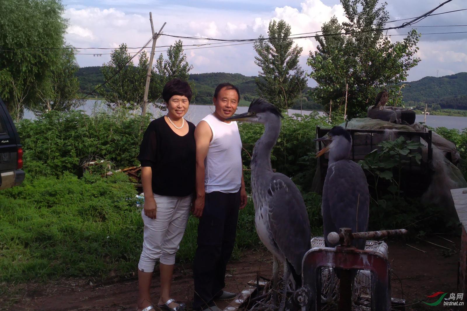 水库老板夫妇经常为小苍鹭下湖捕鱼。.jpg
