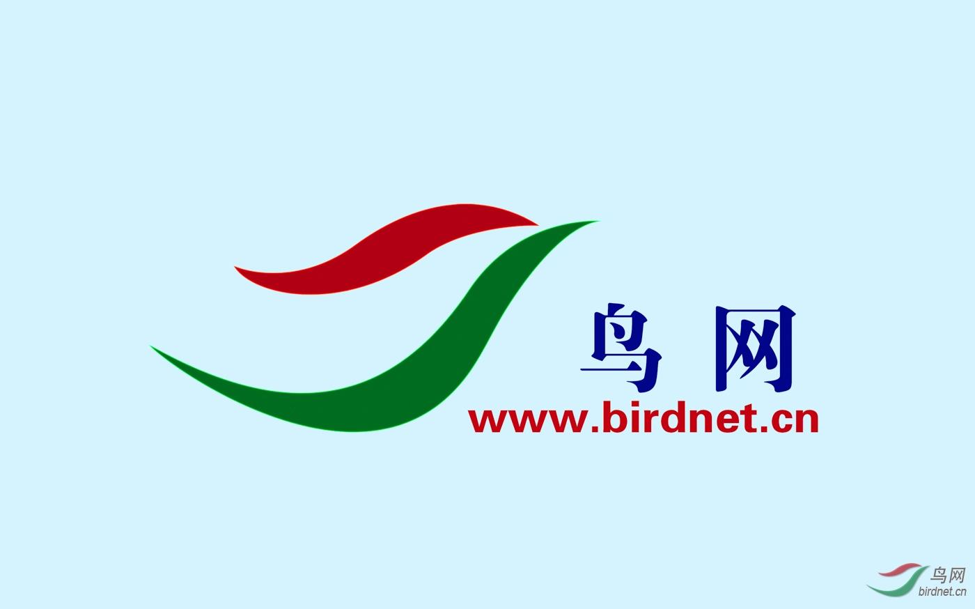 11105-鸟网LOGO.jpg
