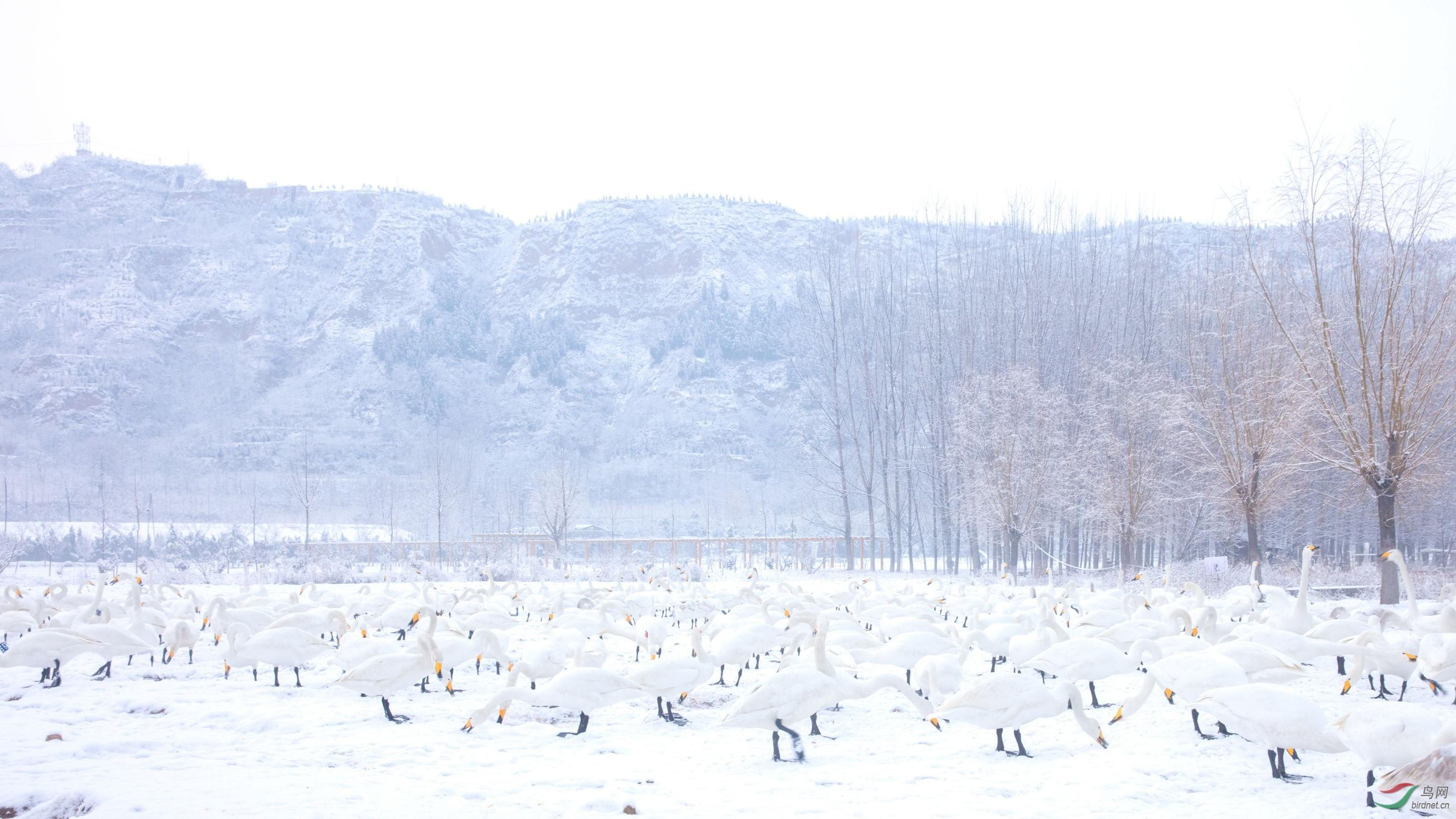 天鹅湖 (6).JPG