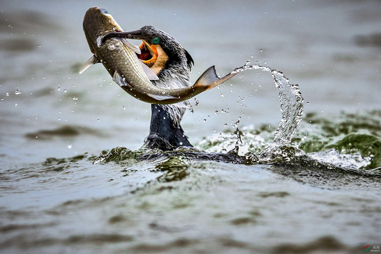 鱼获.jpg