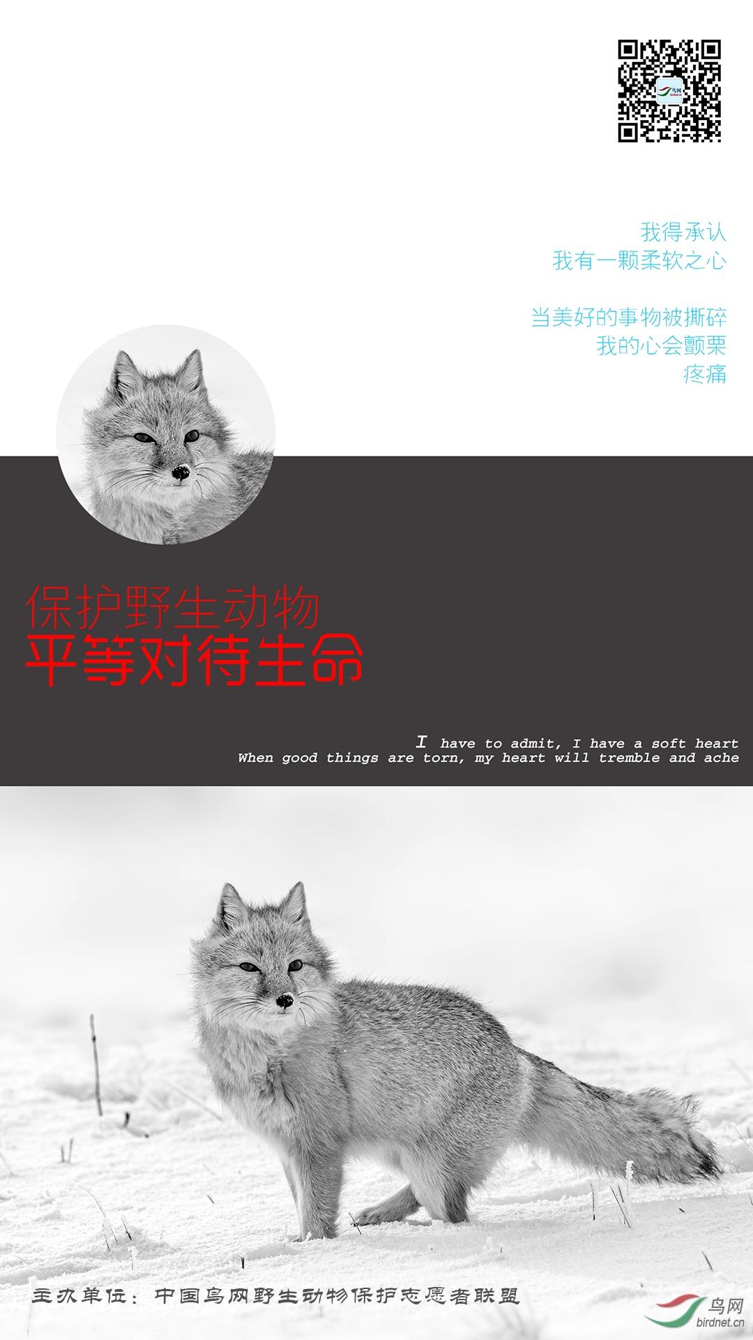 雪地沙狐(张榜).jpg
