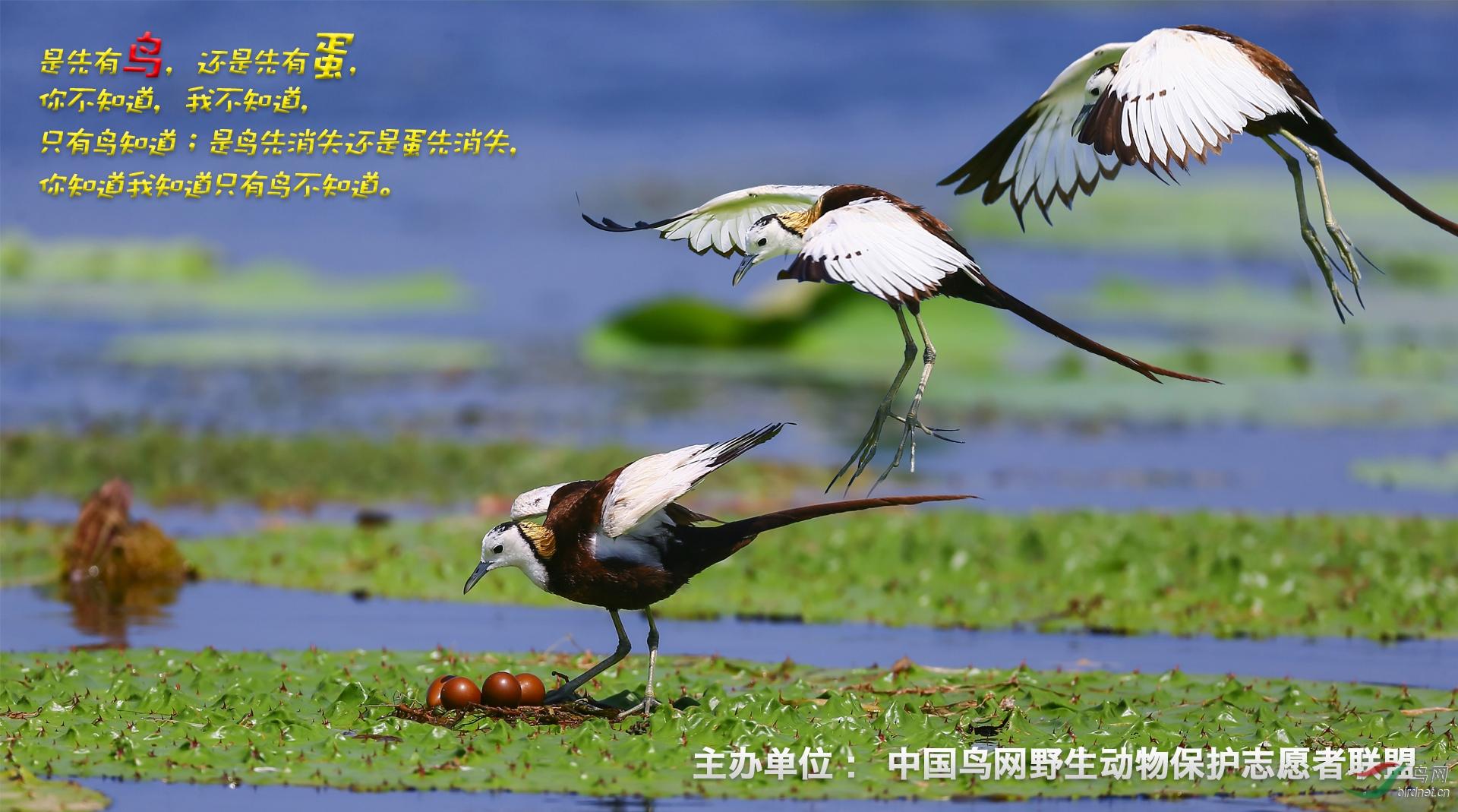 鸟与蛋--鸟网征集(舒仁庆设计13997700123)完美好难.jpg