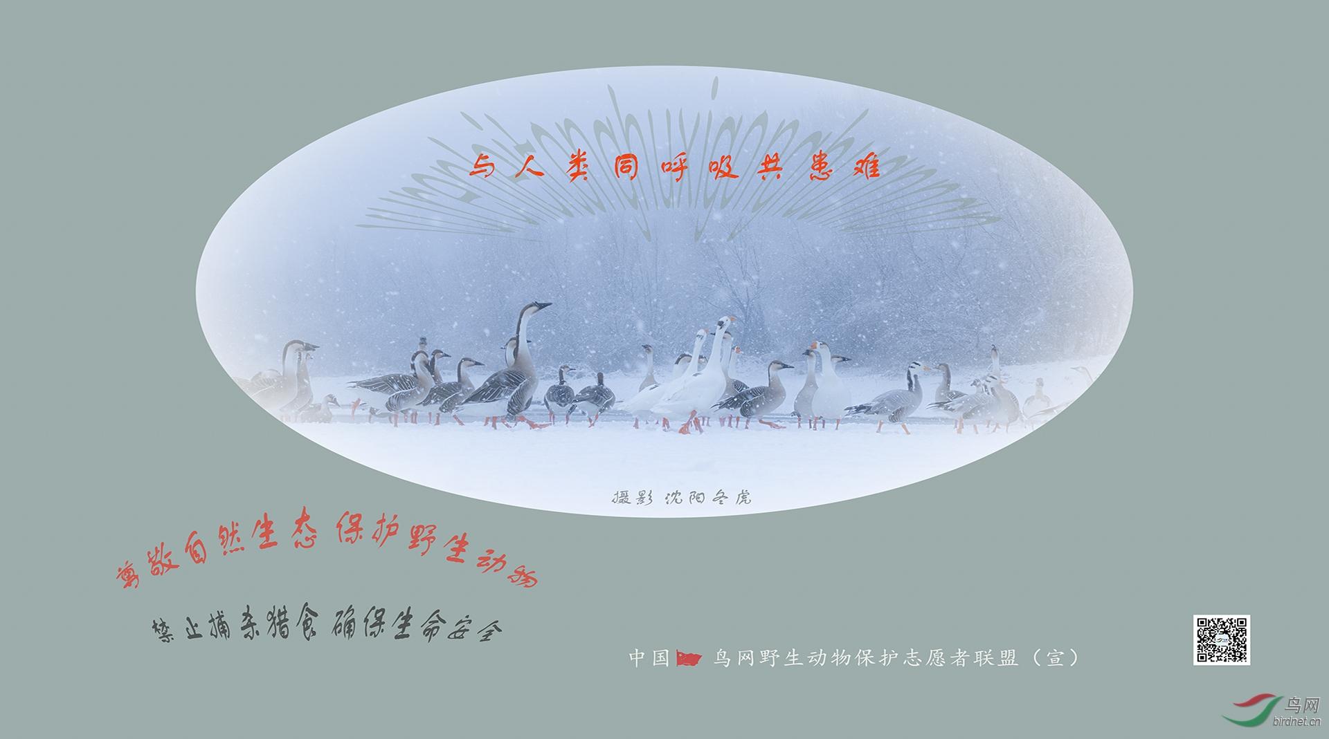 沈阳冬虎 (2).jpg