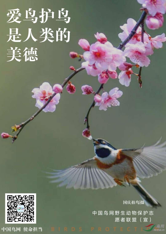 国庆拍鸟.jpg