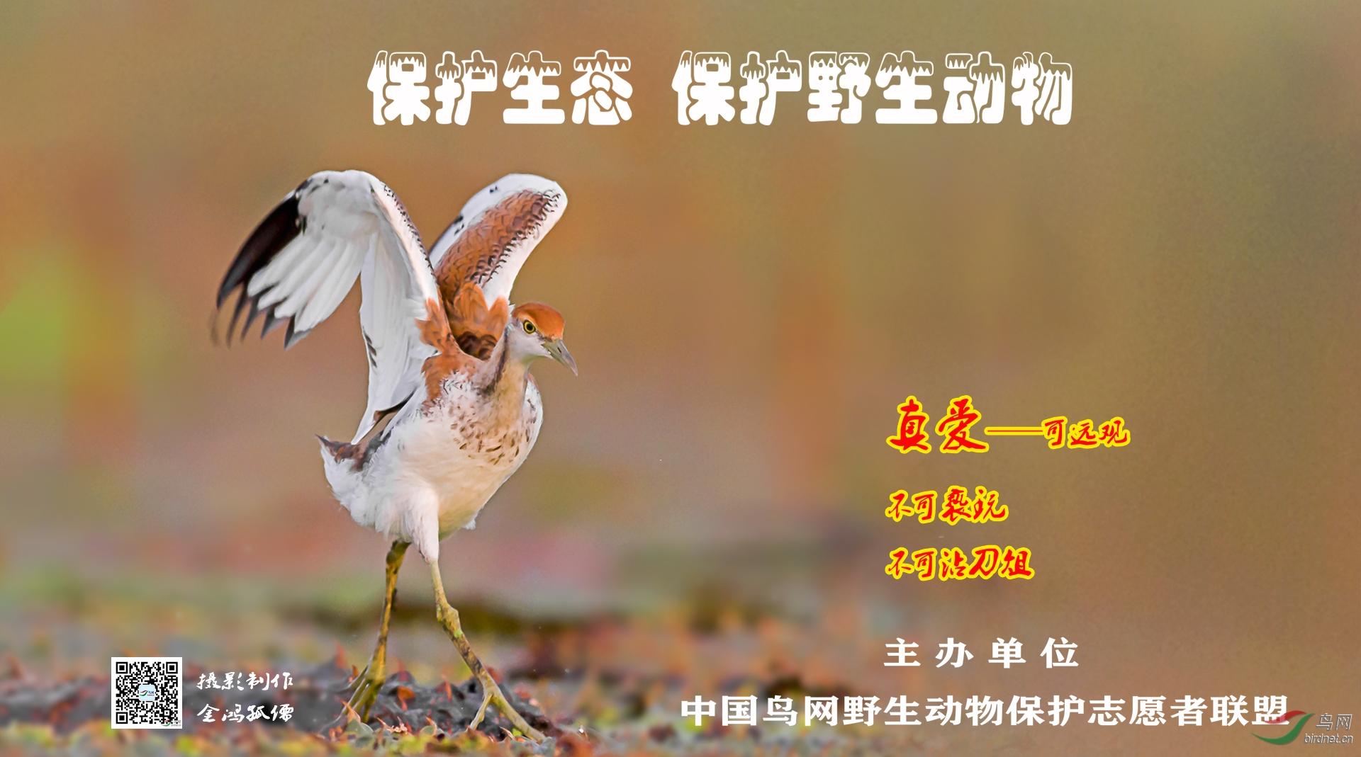 金鸿孤儒····海报2.jpg