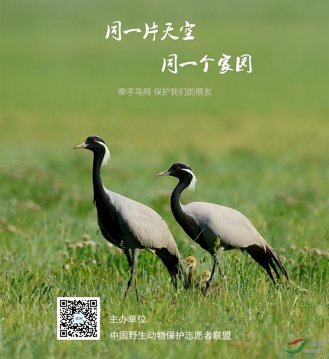 龙在上(鸟网ID).jpg