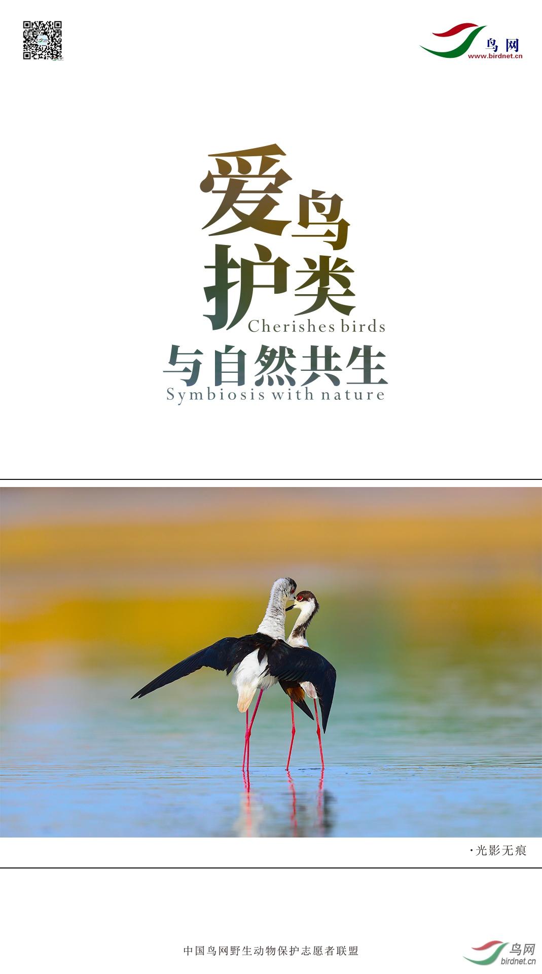 绿洲----爱护鸟类2(1).jpg
