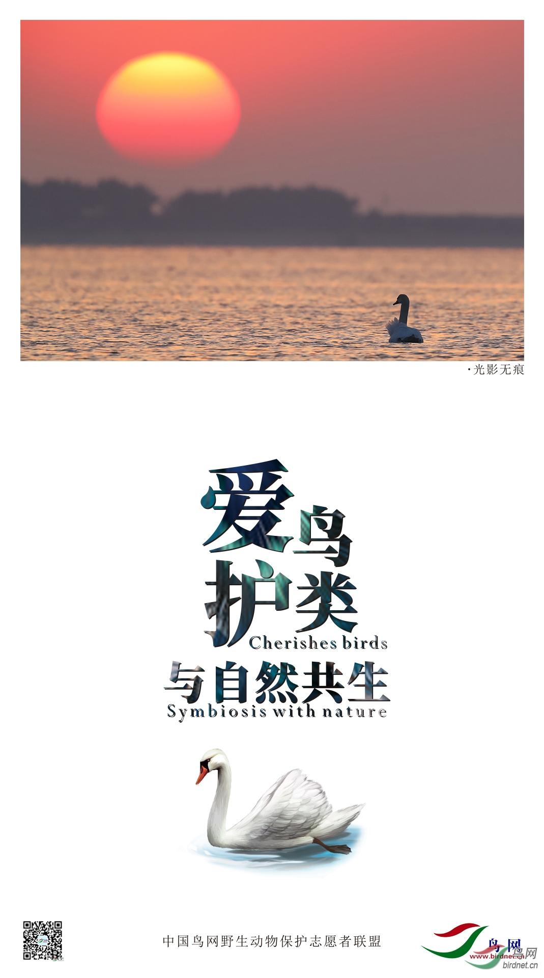 绿洲-爱护鸟类(1).jpg