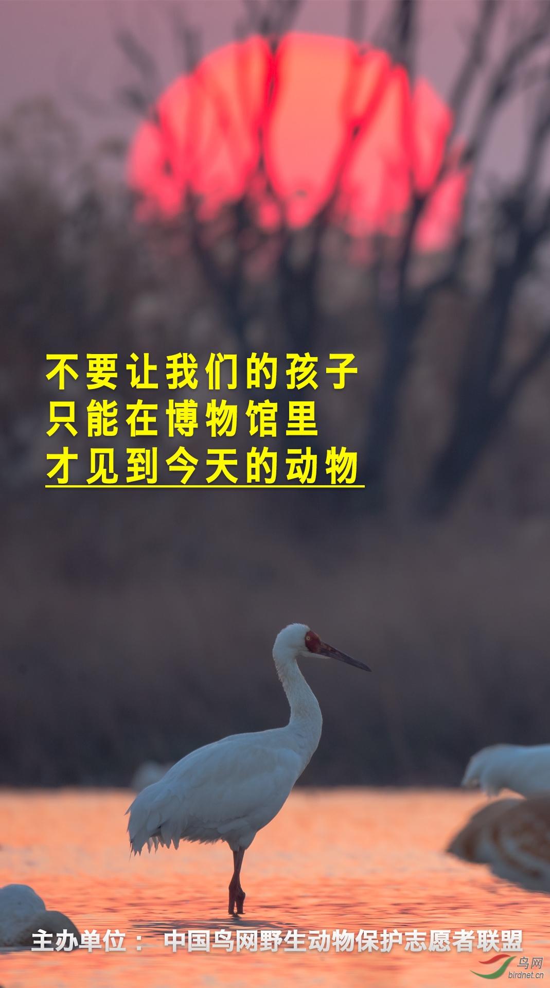 鸟网账号:完美好难···博物馆看动物-舒仁庆-13997700123鸟网公益广告-3.jpg