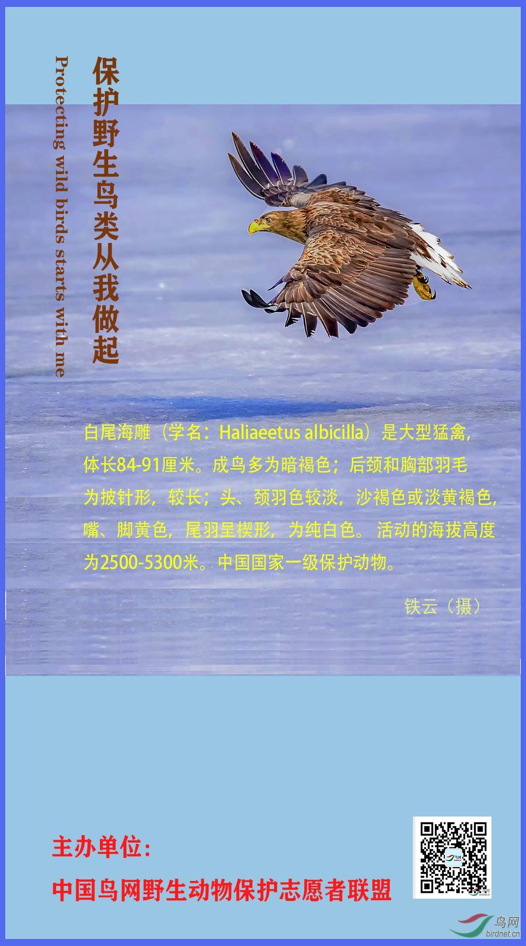 宣传海报1(铁云).jpg