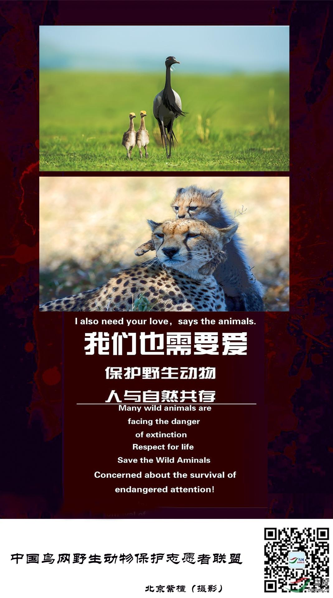 野生动物保护海报-北京紫檀1.jpg