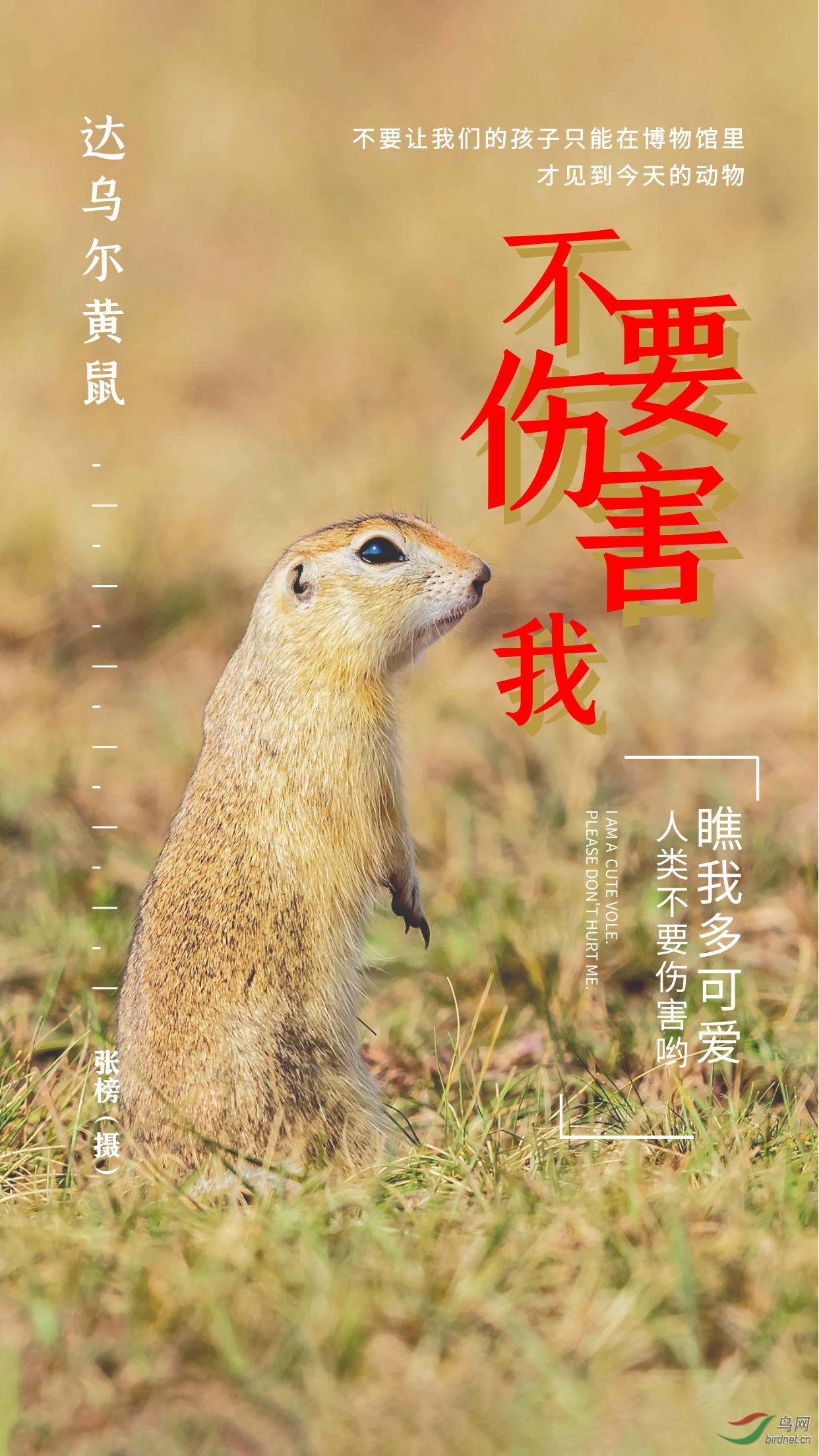 张榜-达乌尔黄鼠.jpg