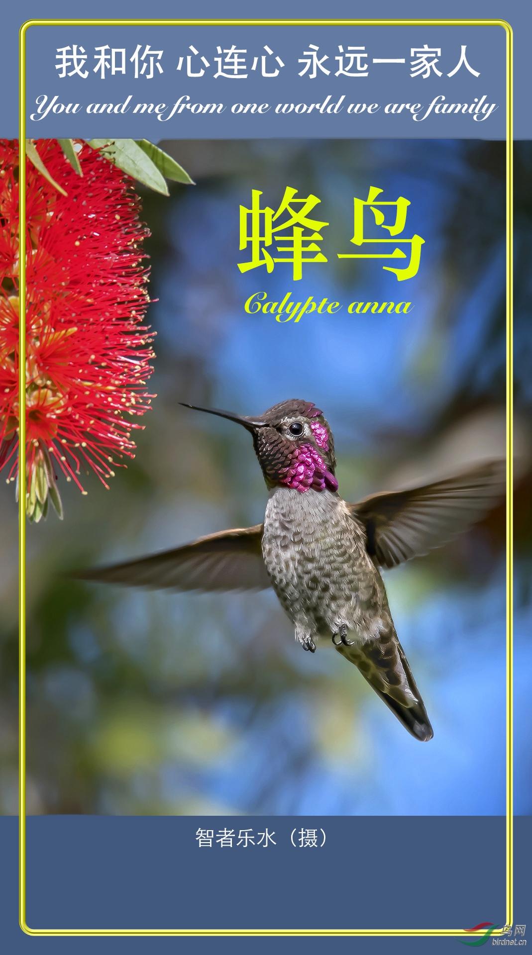 智者乐水DSC_9182b蜂鸟海报2.jpg