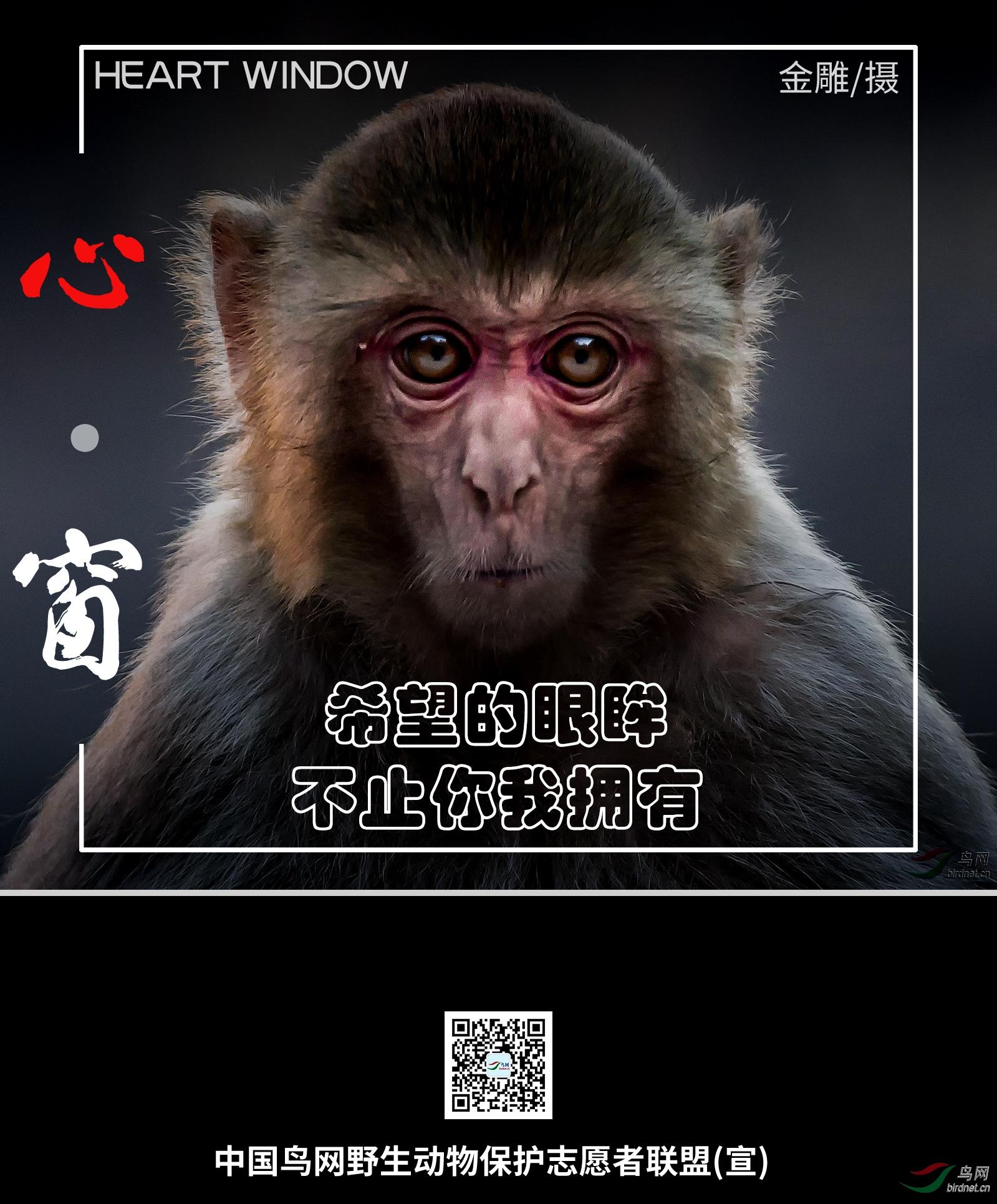 猴子01.jpg