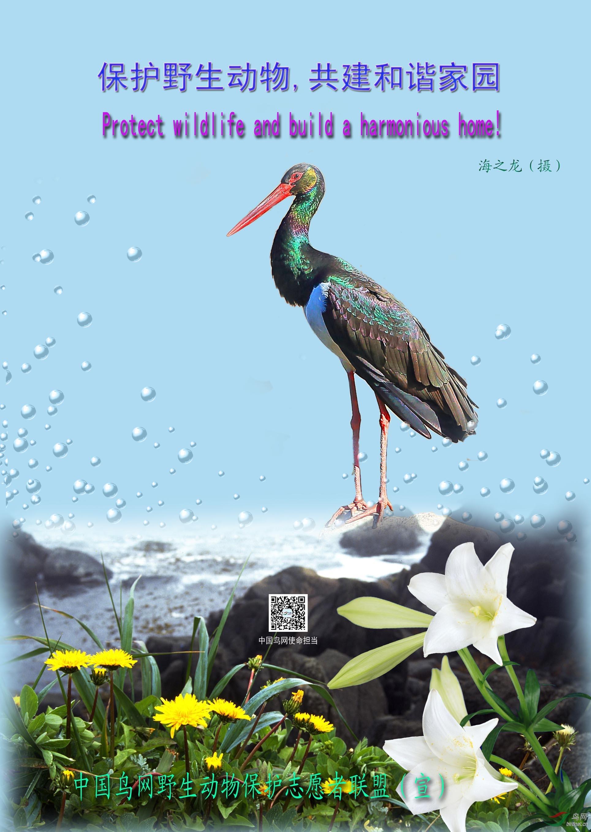 海之龙保护野生动物,共建和谐家园.jpg