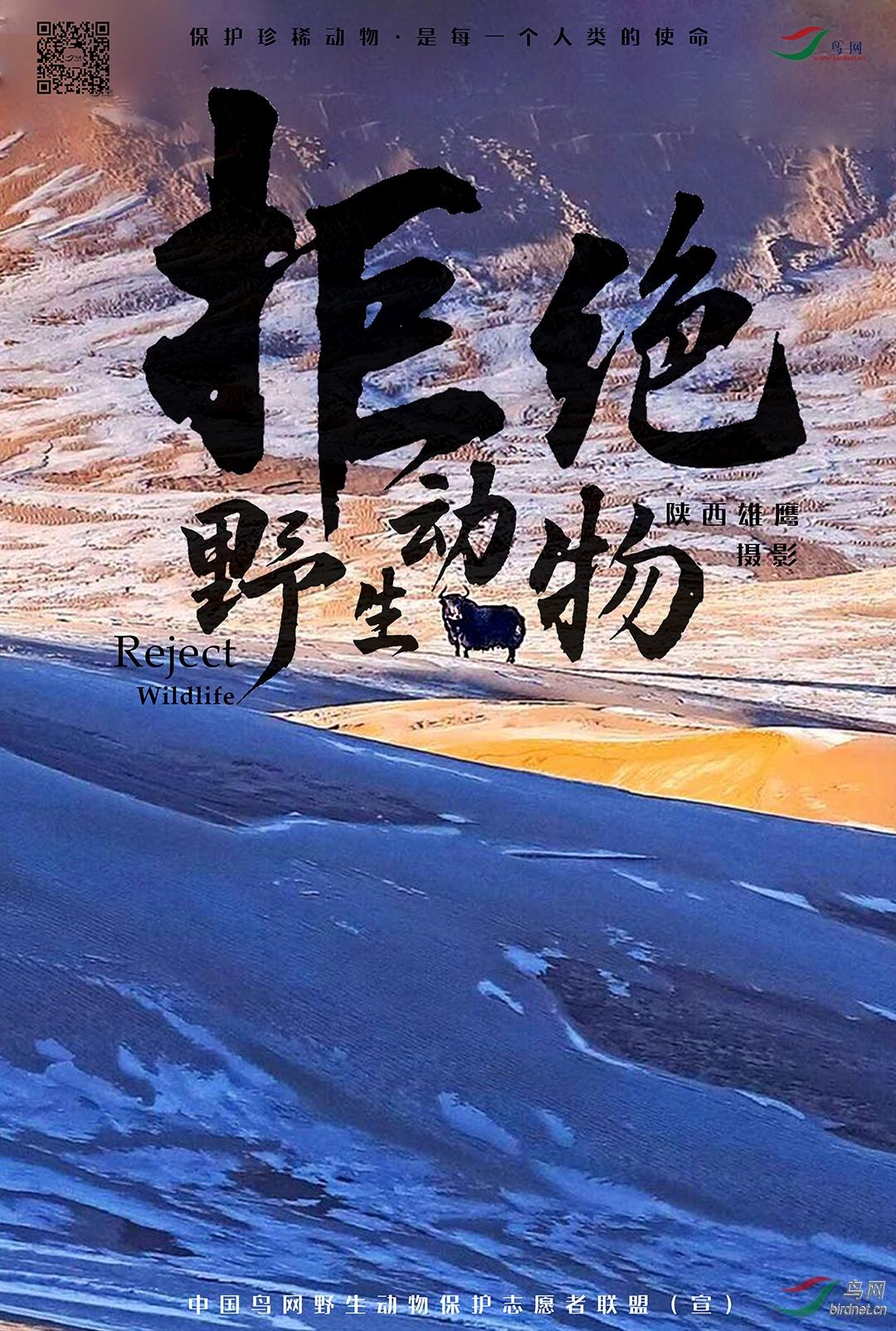 陕西雄鹰13.jpg