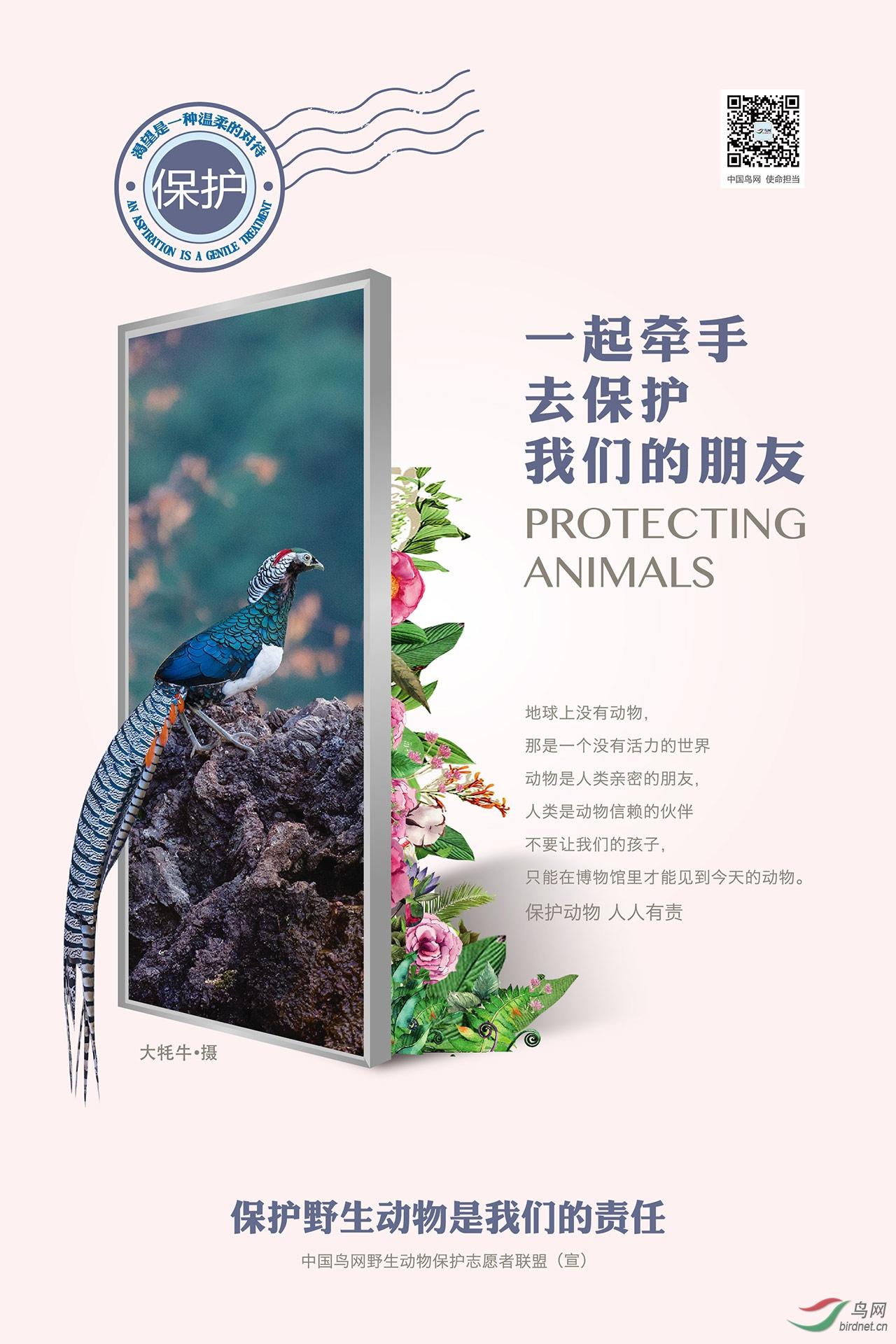 鸟网招贴画_BY-大牦牛(张建林)摄_方案1.jpg