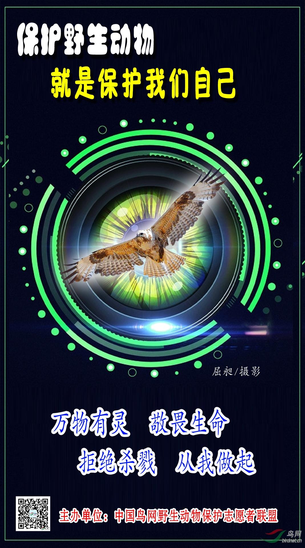 宣传海报--屈昶(网名:等你)--13993637930 (2).jpg