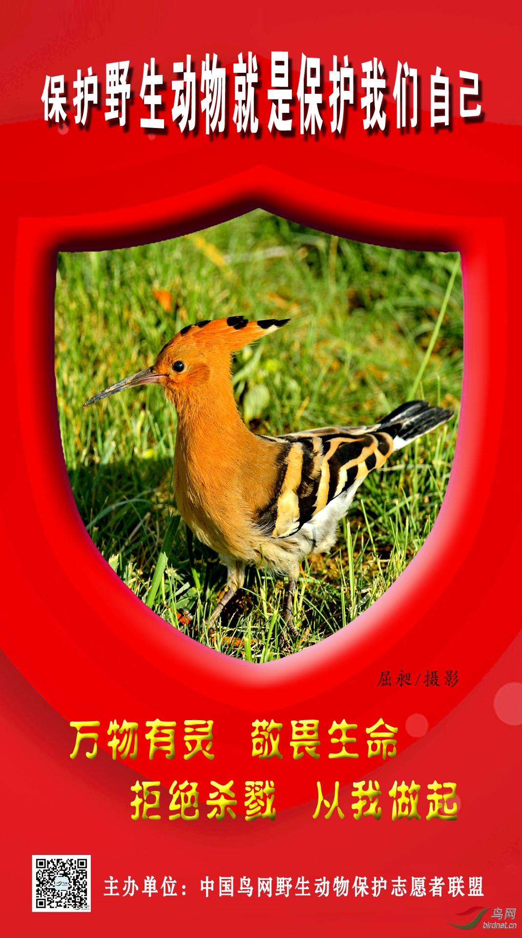 宣传海报--屈昶(网名:等你)--13993637930 (4).jpg