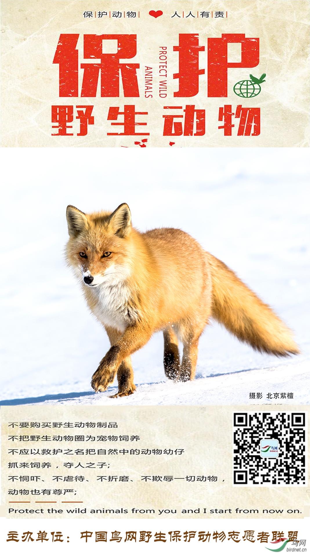 野生动物保护海报-北京紫檀.jpg
