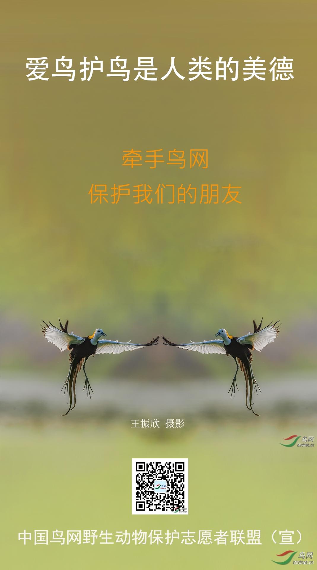 野生动物保护宣传海报 作者:自然的风.jpg