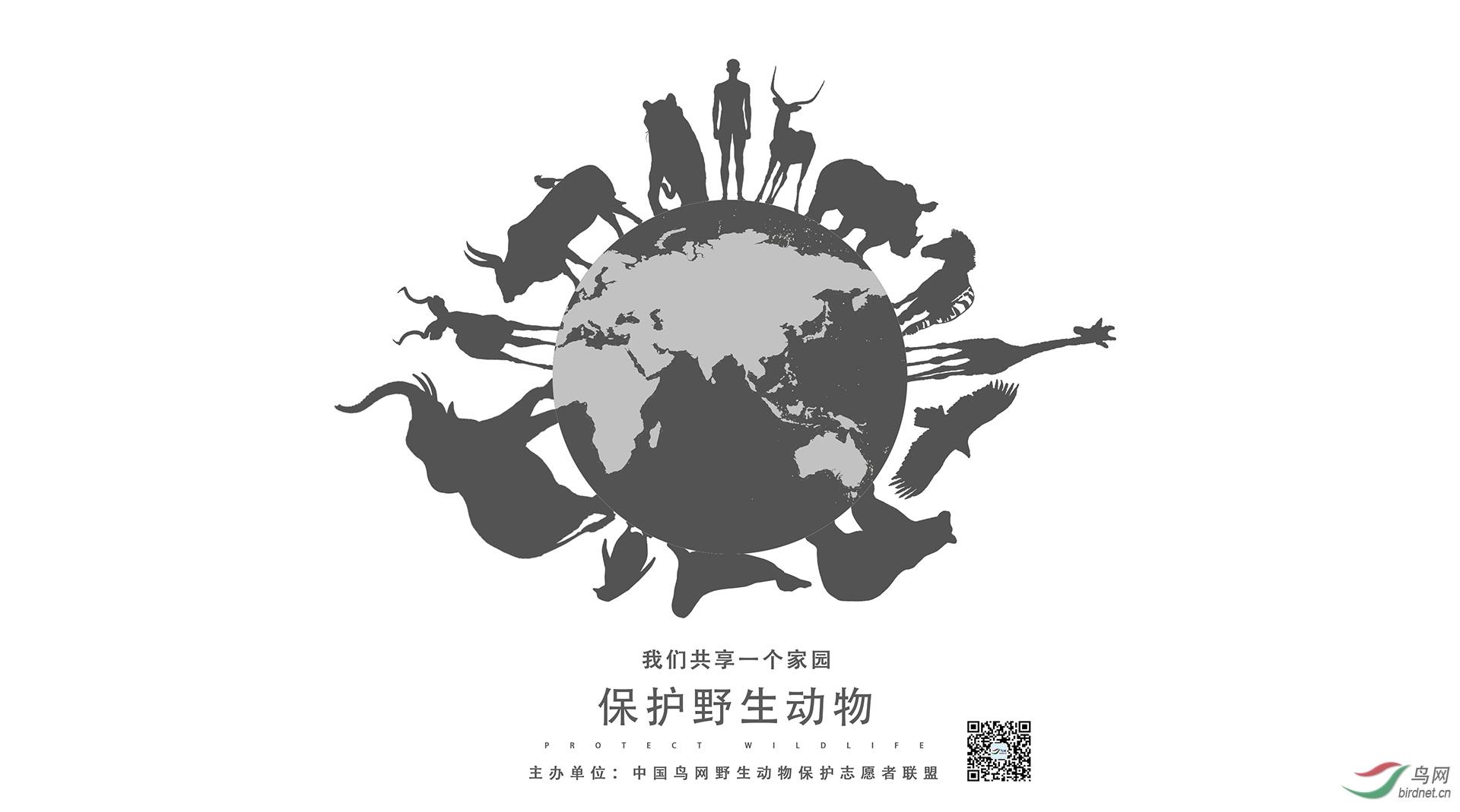 梓先 保护野生动物海报2.jpg