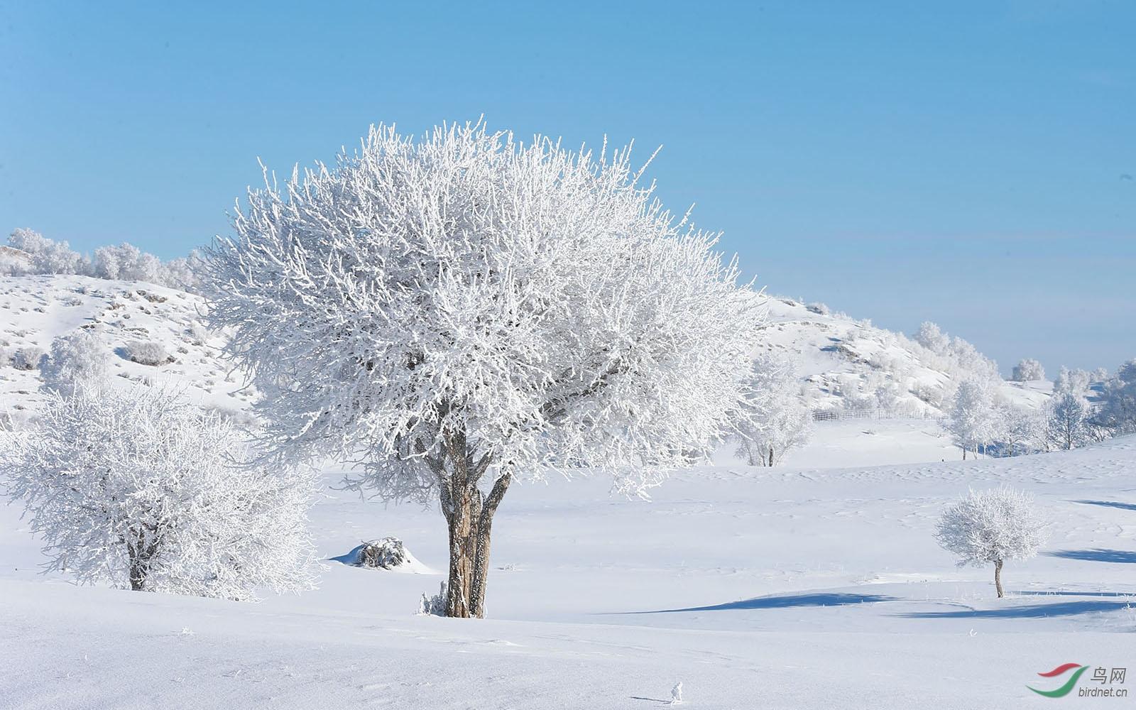 冬季03.JPG