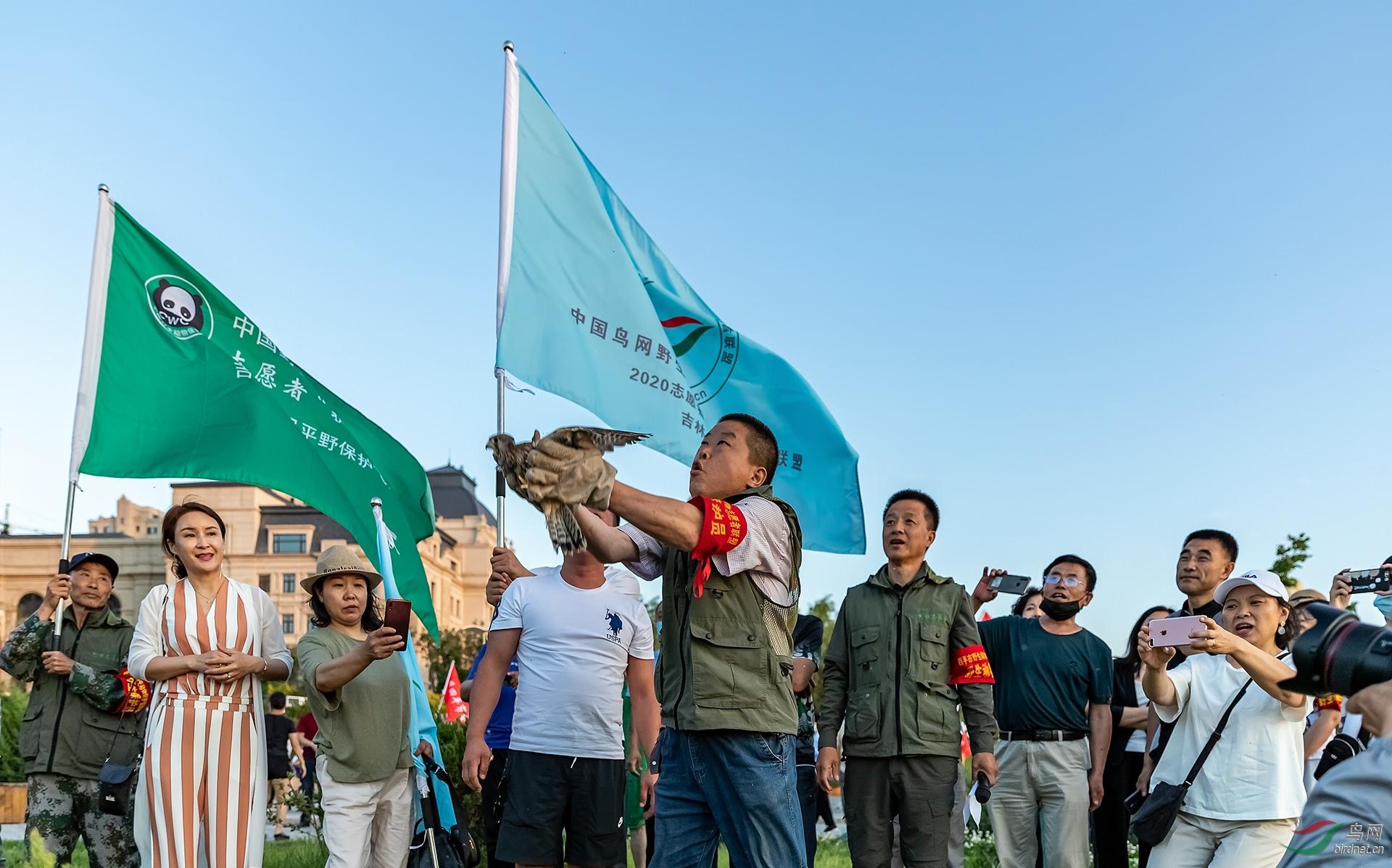 13,野保志愿者宋正玉 中国鸟网网名:老五摄影放飞第一只精心喂养的红隼