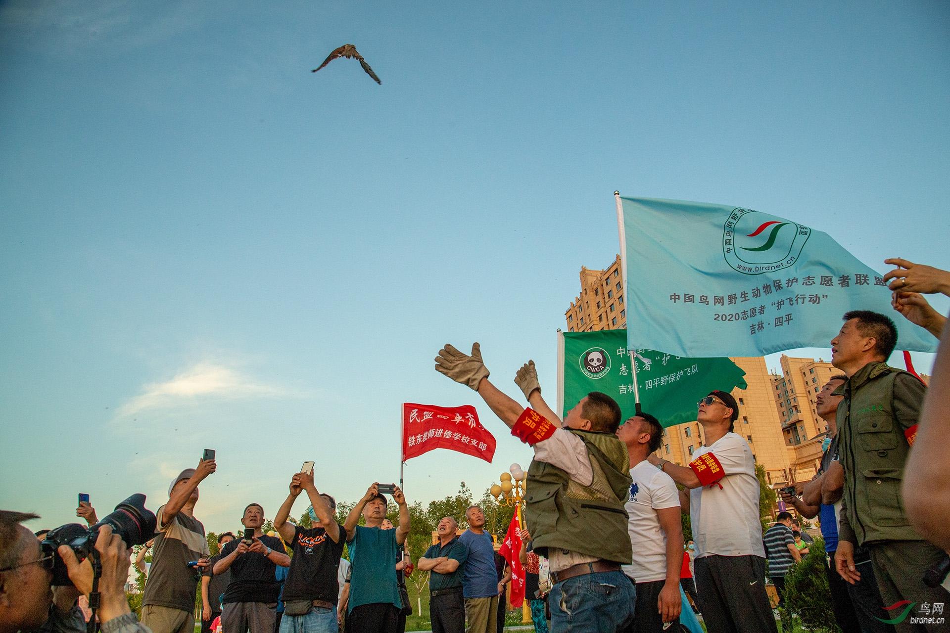 15,野保志愿者和现场观众看到成功放飞最后一只红隼全部飞向大自然,现场一片欢呼。