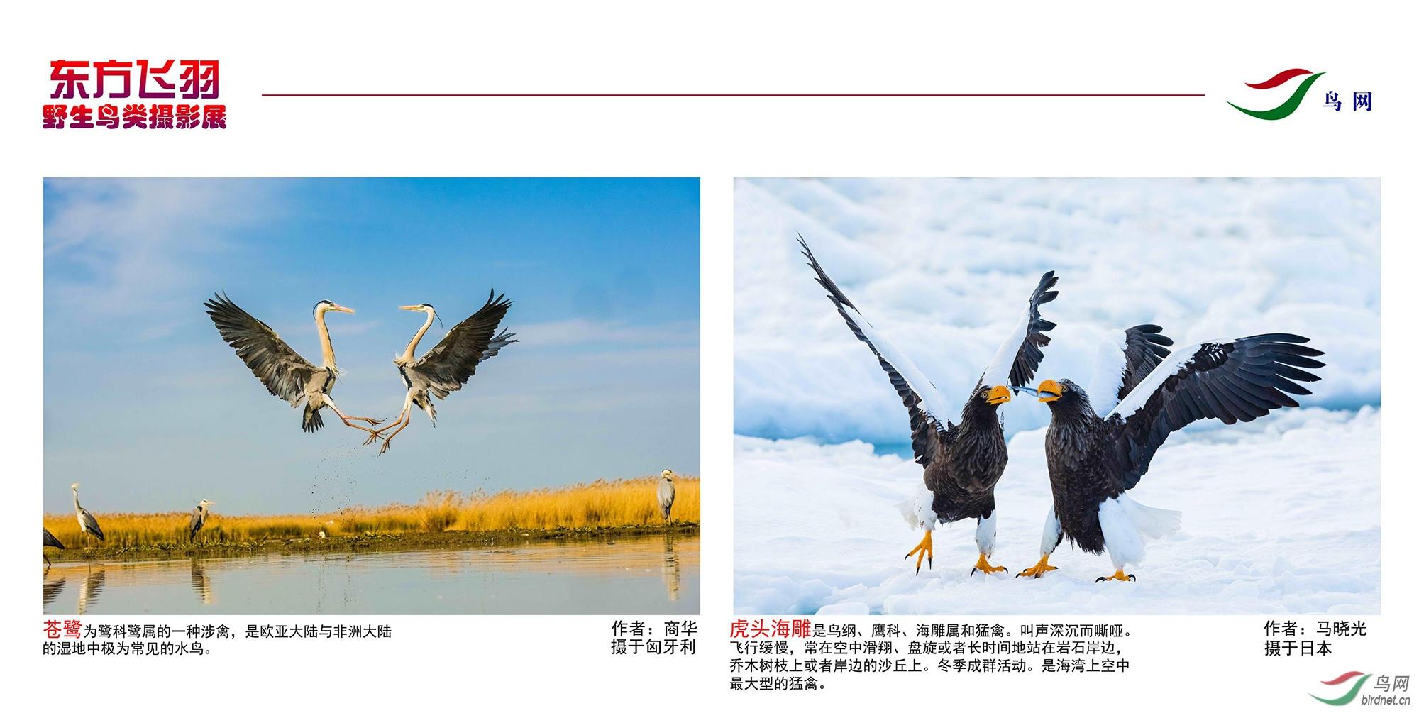 1_东方明珠摄影展照片_12.jpg