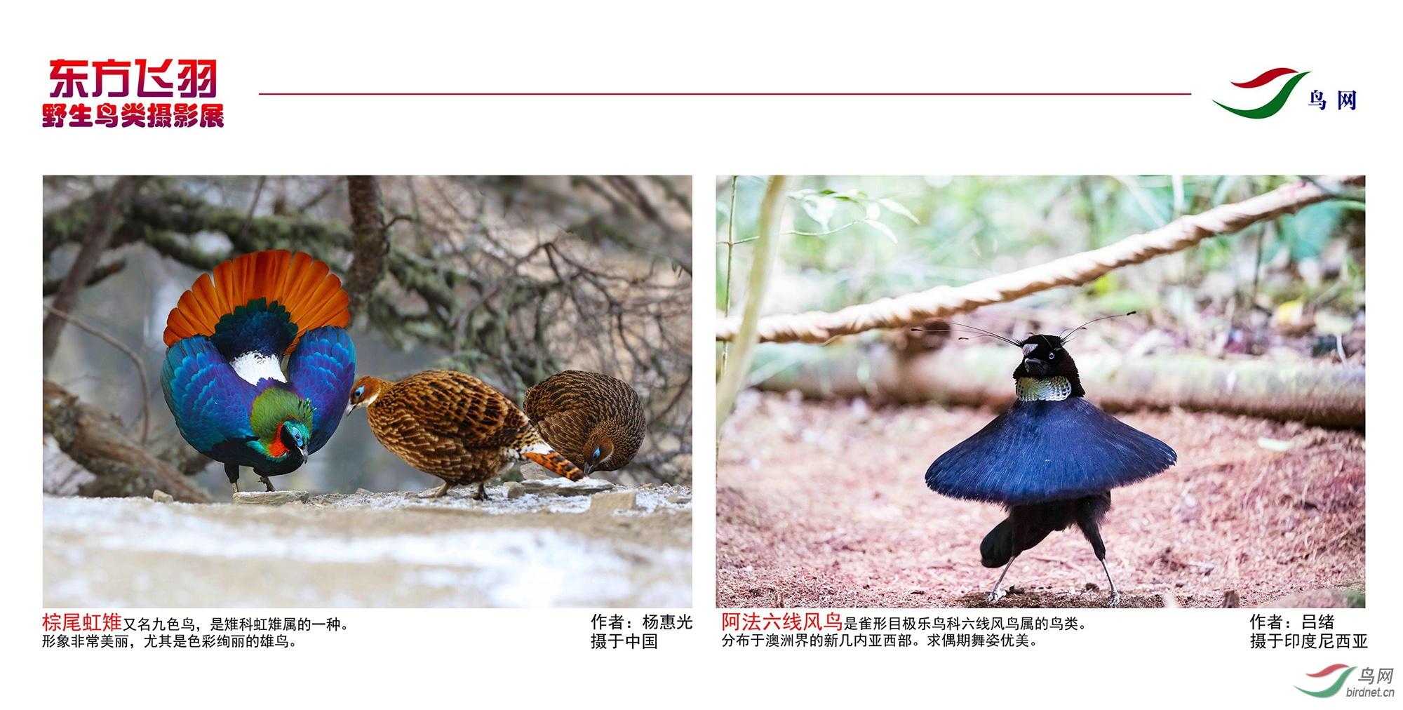 1_东方明珠摄影展照片_14.jpg