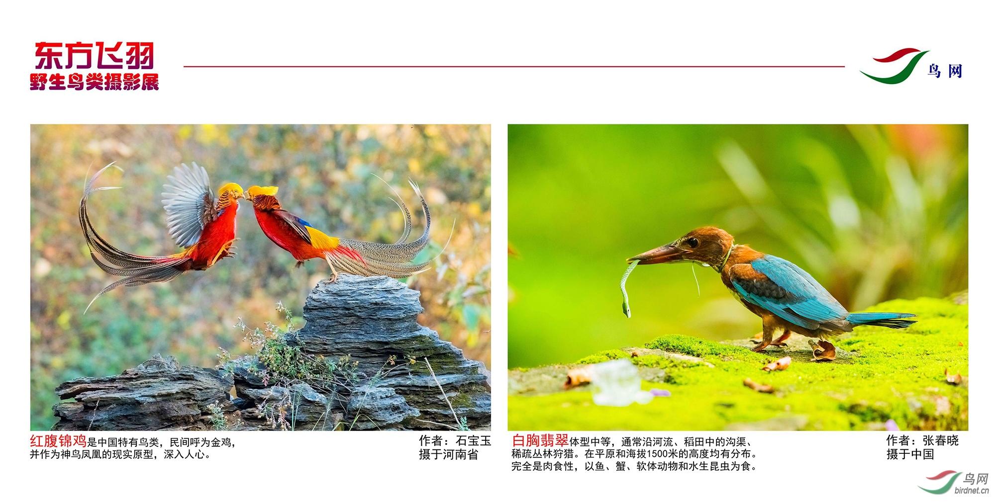 1_东方明珠摄影展照片_13.jpg