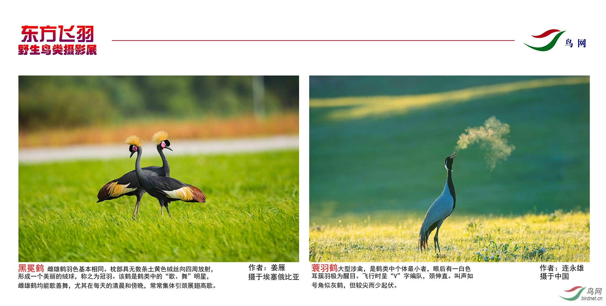 1_东方明珠摄影展照片_16.jpg