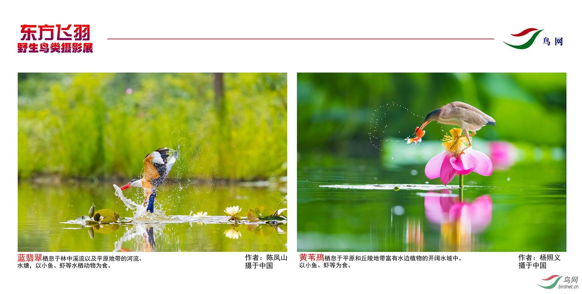 1_东方明珠摄影展照片_15.jpg