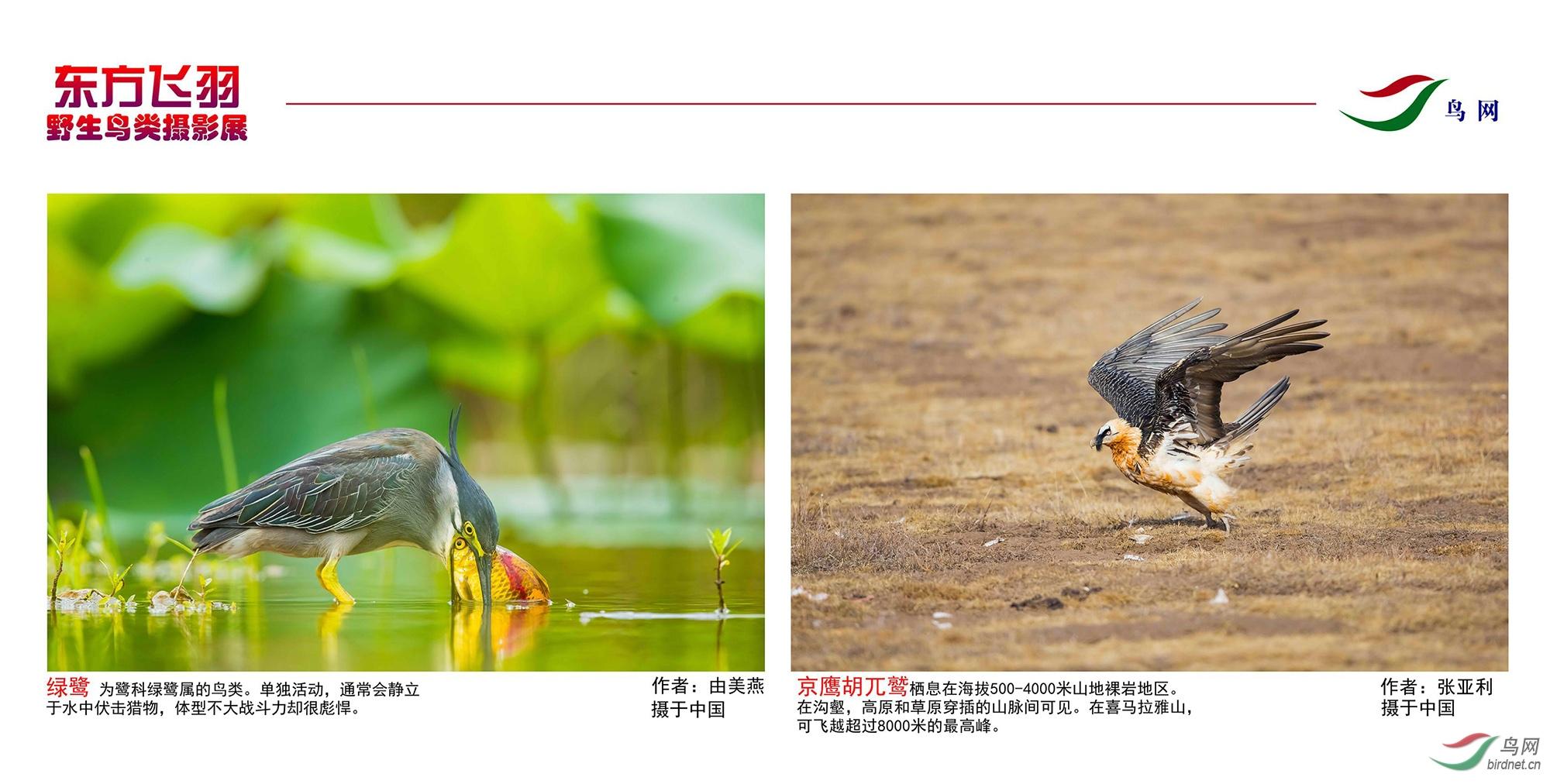 1_东方明珠摄影展照片_17.jpg