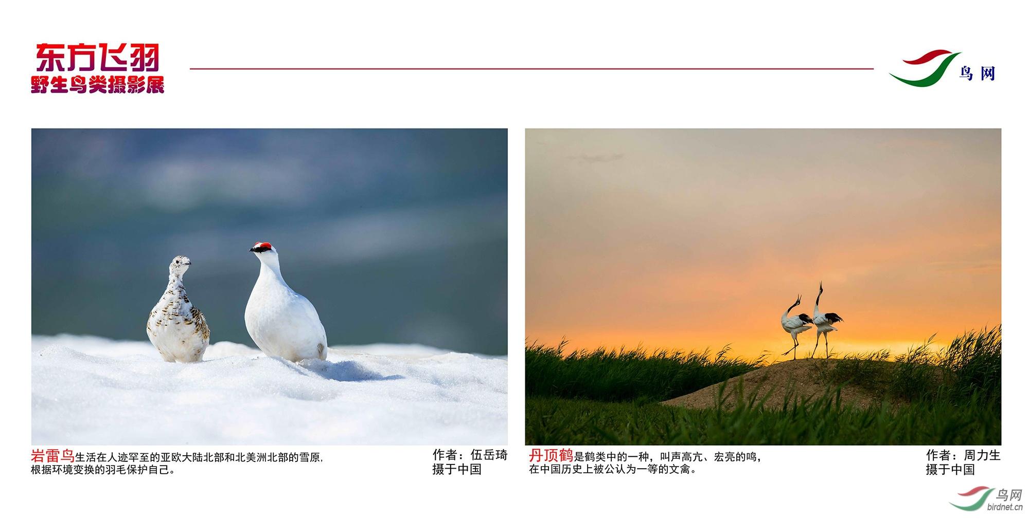 1_东方明珠摄影展照片_21.jpg