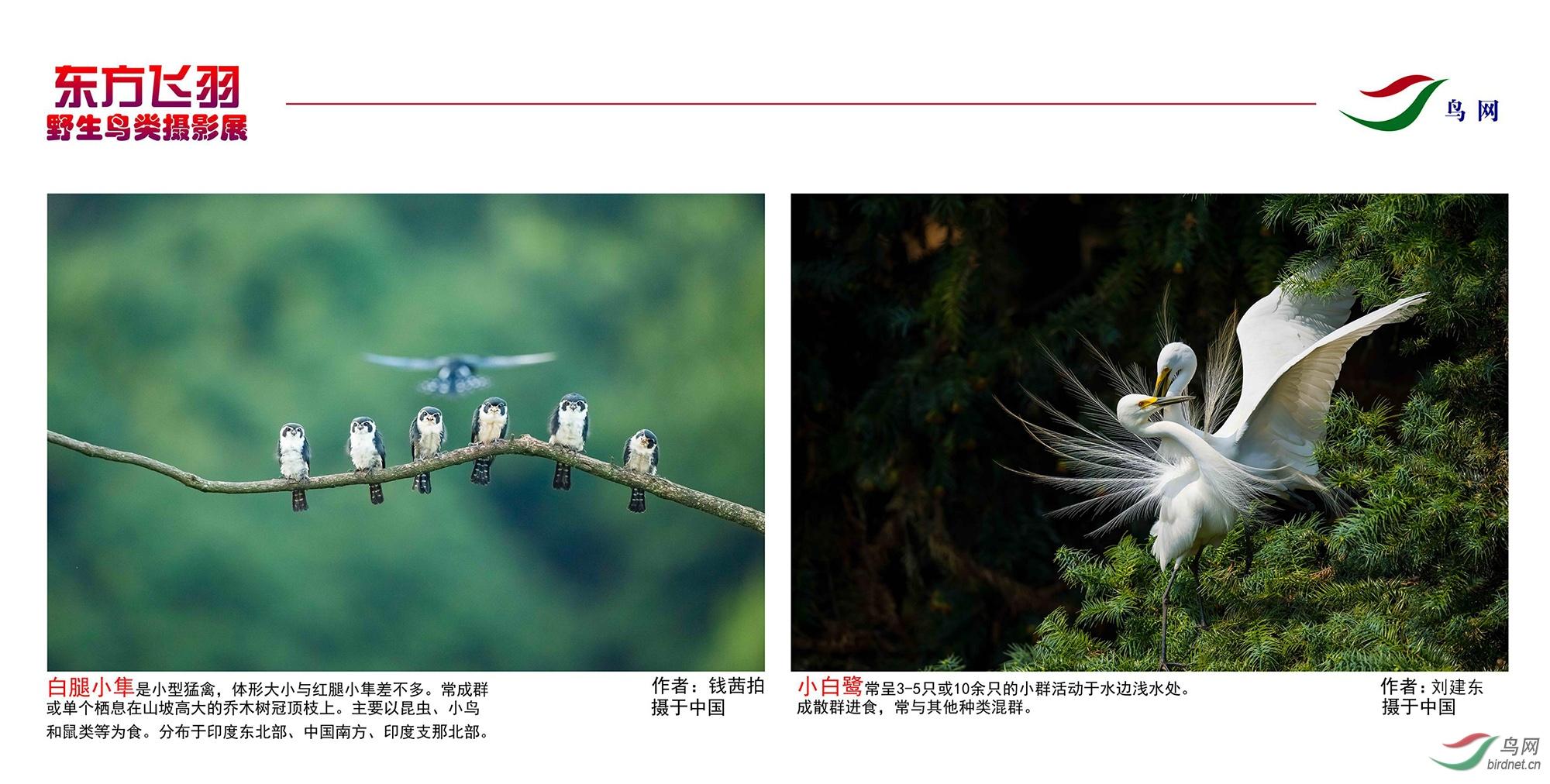 1_东方明珠摄影展照片_23.jpg