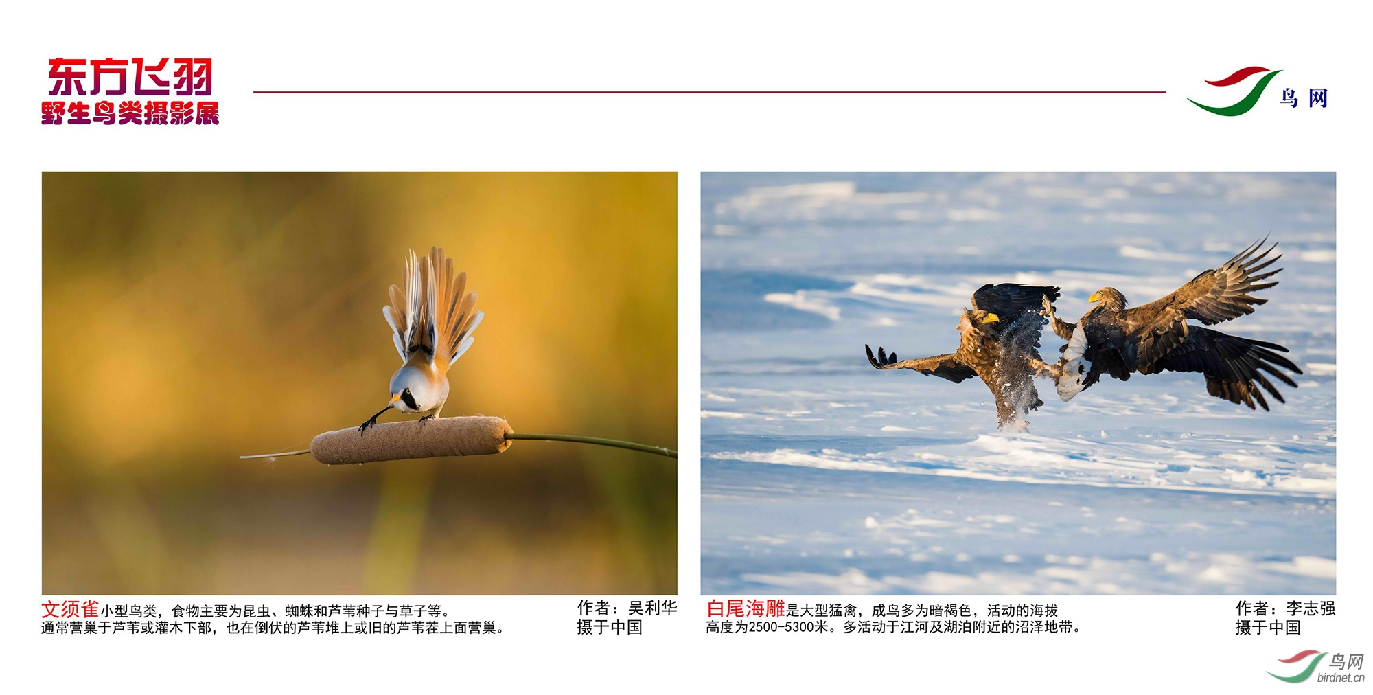 1_东方明珠摄影展照片_22.jpg