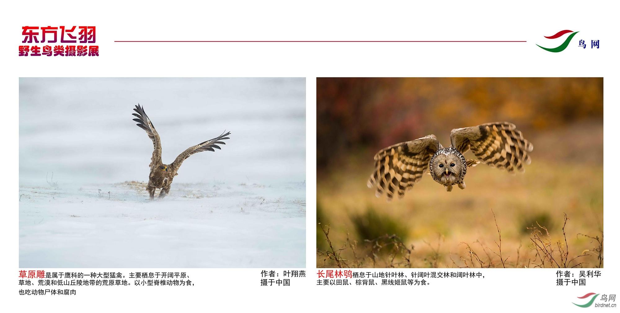1_东方明珠摄影展照片_24.jpg