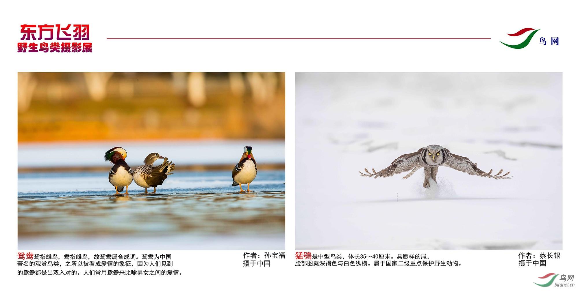 1_东方明珠摄影展照片_27.jpg