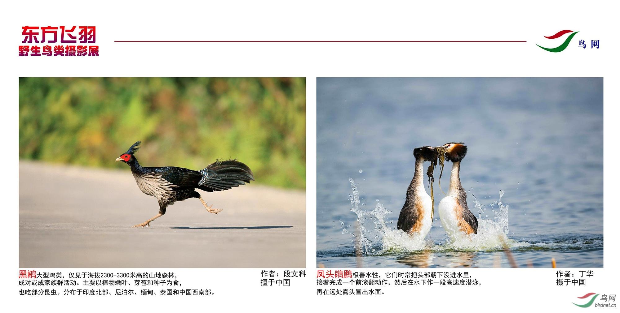 1_东方明珠摄影展照片_28.jpg