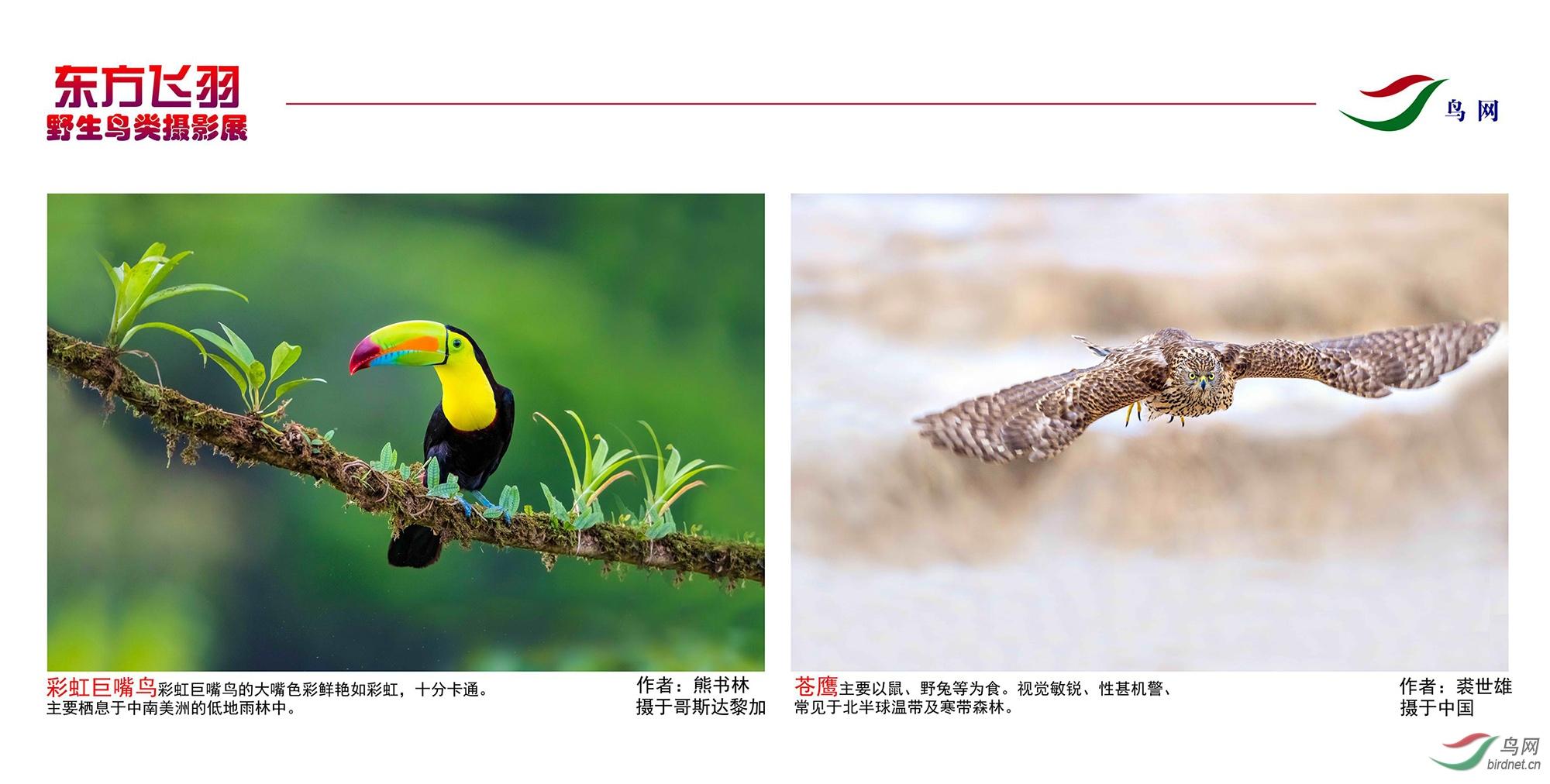 1_东方明珠摄影展照片_01.jpg